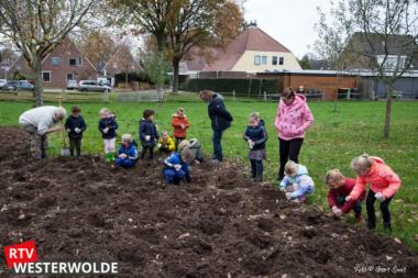 Kinderen van de Clockeslach en de Zaaier in Vlagtwedde poten drieduizend bloembollen