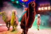 pers3-kamelen-Enrico-Frank