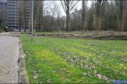 002_Stormschade-Boom-afgeknapt-de-Renne-09-02-20
