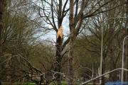 003_Stormschade-Boom-afgeknapt-Maarsbroek-09-02-20