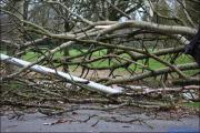 004_Stormschade-Boom-afgeknapt-Maarsbroek-09-02-20