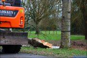 005_Stormschade-Boom-afgeknapt-Maarsbroek-09-02-20