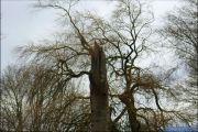 006_Stormschade-Boom-afgeknapt-Maarsbroek-09-02-20