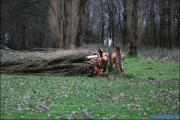 006_Stormschade-Boom-afgeknapt-de-Renne-09-02-20