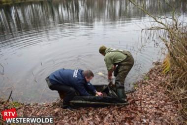 Hengelsportfederatie Groningen en Drenthe zet 5.000 kilo karpers uit