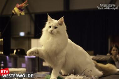 Mundikat organiseert voor het eerst kattenshow in Stadskanaal