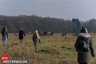 Zeer geslaagde wandeling naar de Konikpaarden in Bourtange